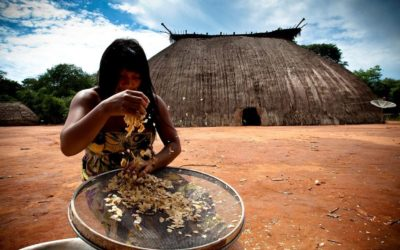 From Brazil to Cameroon, forest communities fight climate change