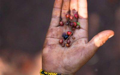 Brazilian indigenous leaders fight coronavirus with medicinal plants