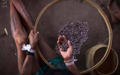 Xingu Initiative was chosen from more than 200 proposals from around the world. With 13 years of history, it is the largest network of native seeds in Brazil